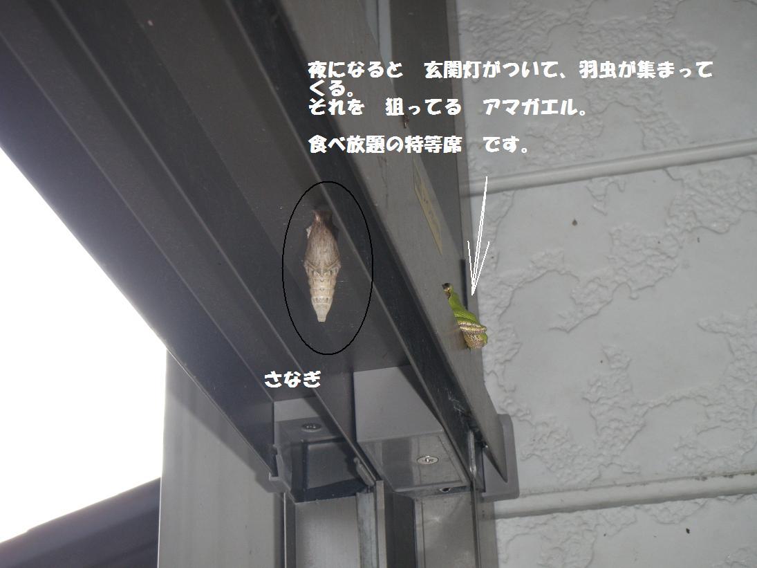 d0162005_21481126.jpg