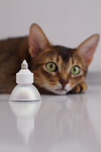[猫的]ハロゲンライト_e0090124_8295959.jpg