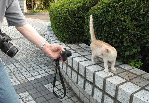 野良の仔猫の撮り方は_f0214527_14235698.jpg