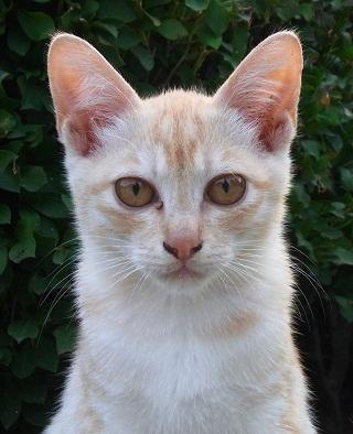 野良の仔猫の撮り方は_f0214527_14301995.jpg