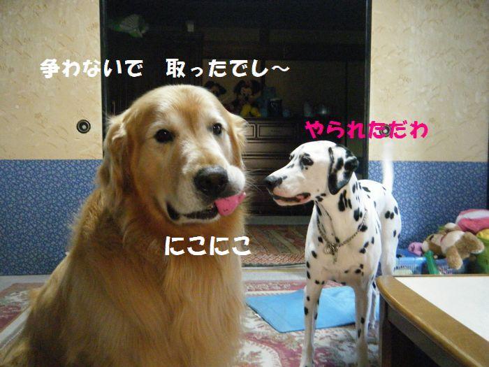 b0127531_2011638.jpg