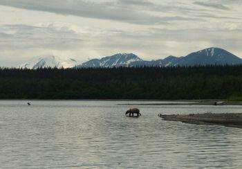 熊、クマ、くま   カトマイ国立公園 _b0135948_5564337.jpg