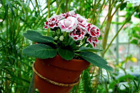 和歌山県植物公園緑花センター _b0093754_23472221.jpg