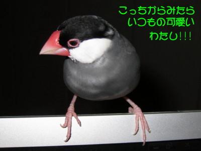b0158061_220840.jpg