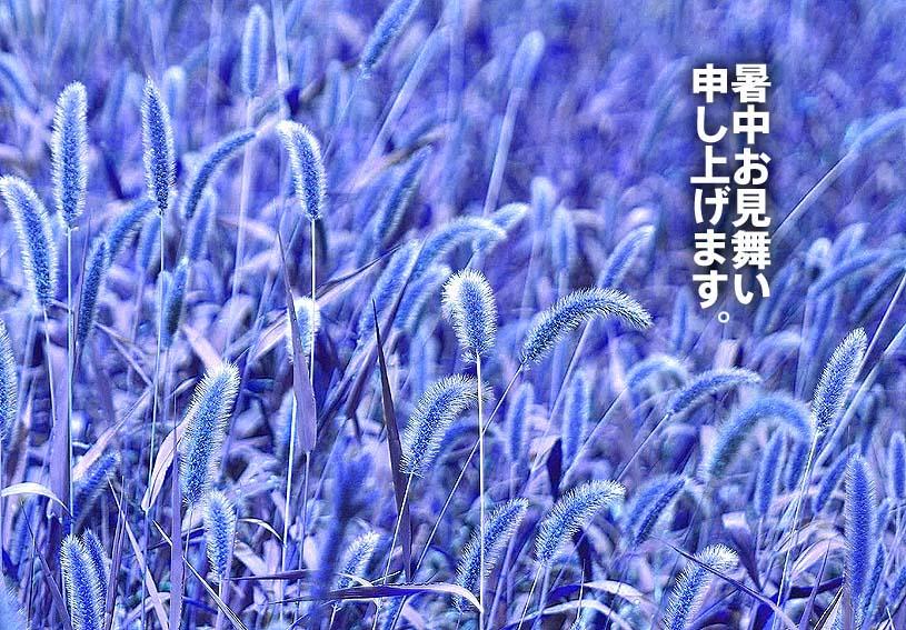 f0198771_142677.jpg