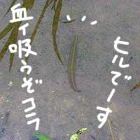 b0057675_11132567.jpg