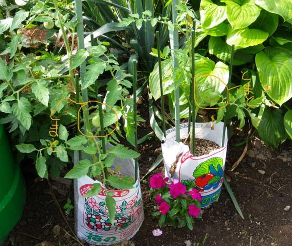 プランター菜園と庭の恵みのジャム♪_a0136293_1339446.jpg