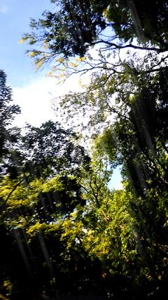森と空_f0235201_21172174.jpg