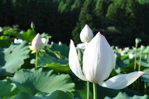南条SAからすぐ!花はすまつり_f0229508_8491936.jpg