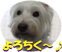 f0084422_1317421.jpg