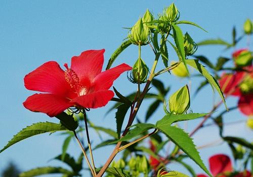 夏の花_f0214527_15715.jpg