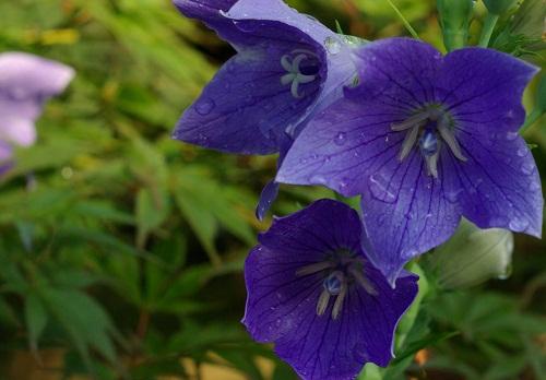 夏の花_f0214527_1595276.jpg