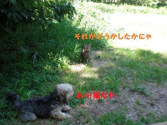 f0114128_19502433.jpg