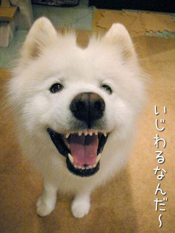 笑顔撮影法_c0062832_17252291.jpg