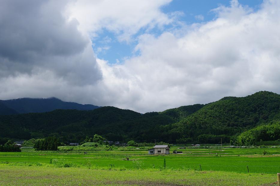 田園で何を撮る..._f0152550_16594798.jpg