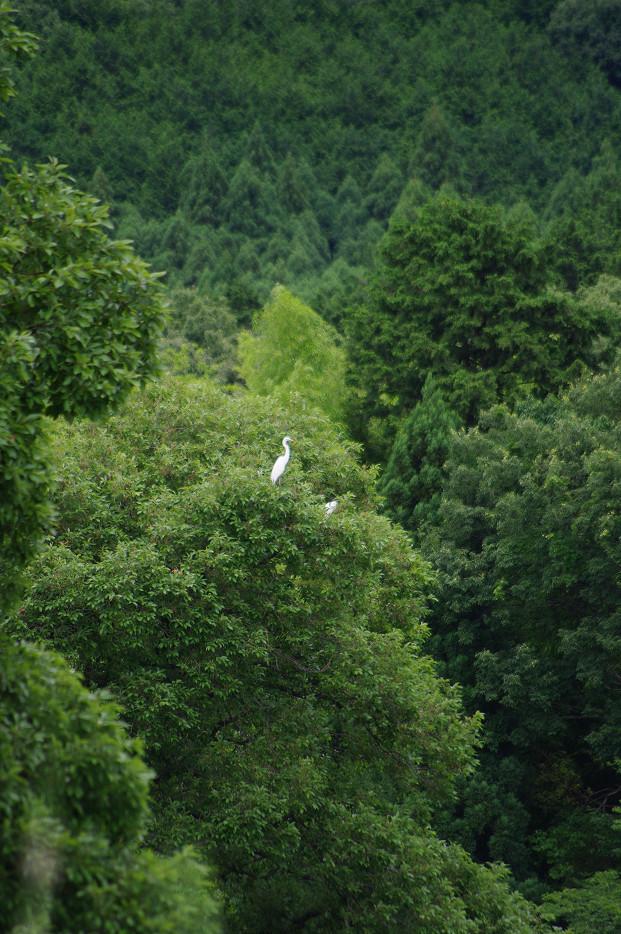田園で何を撮る..._f0152550_16595261.jpg