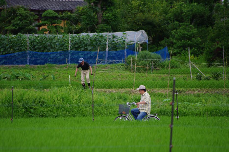 田園で何を撮る..._f0152550_1701790.jpg