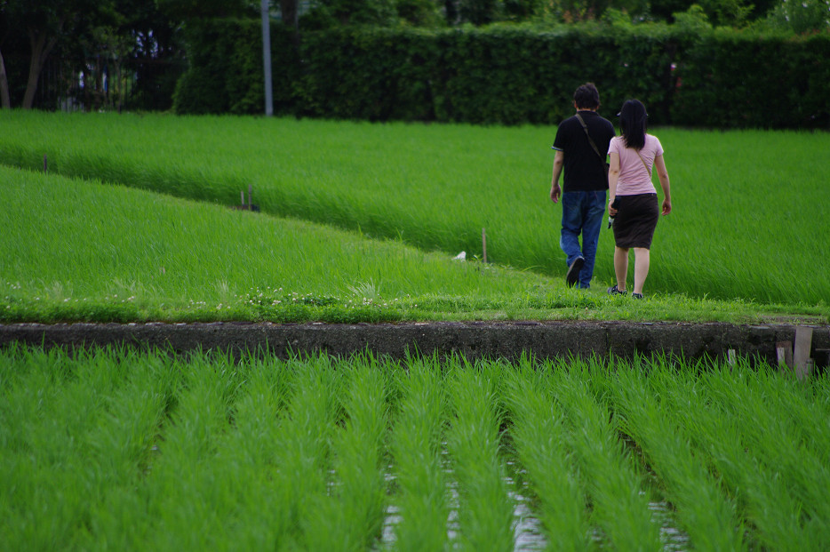 田園で何を撮る..._f0152550_1702270.jpg