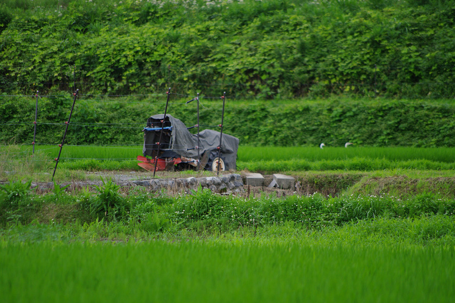 田園で何を撮る..._f0152550_1703168.jpg
