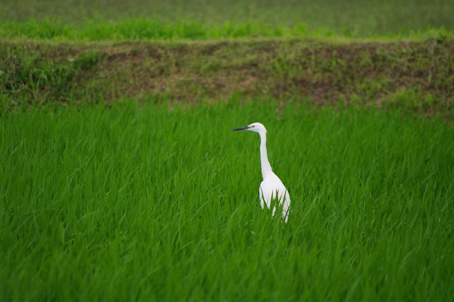 田園で何を撮る..._f0152550_1703714.jpg