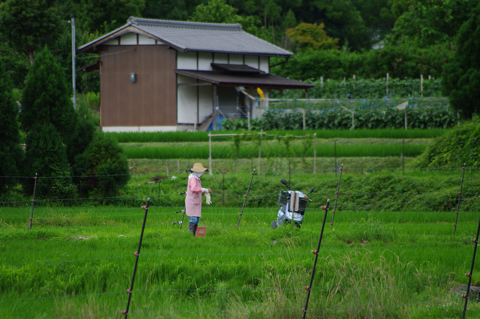 田園で何を撮る..._f0152550_1705097.jpg