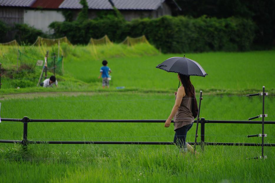 田園で何を撮る..._f0152550_1711090.jpg