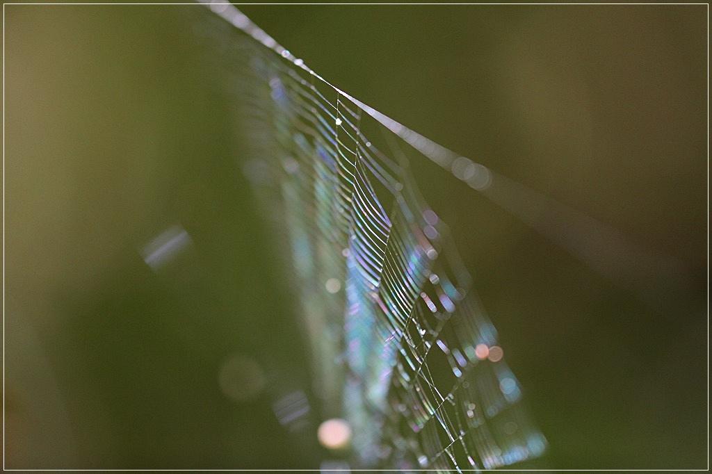 七色の糸_c0188951_2244252.jpg