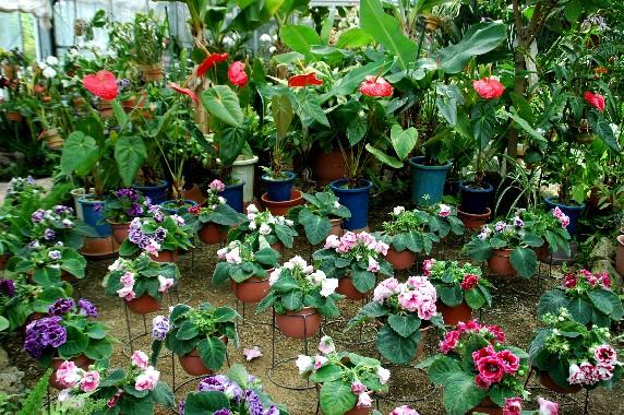 和歌山県植物公園緑花センター _b0093754_2339509.jpg