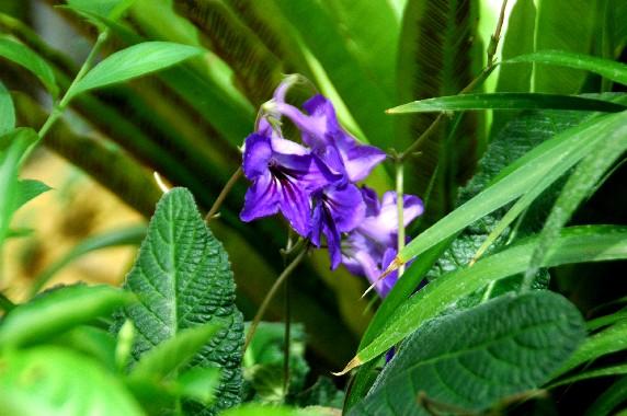 和歌山県植物公園緑花センター _b0093754_23411254.jpg