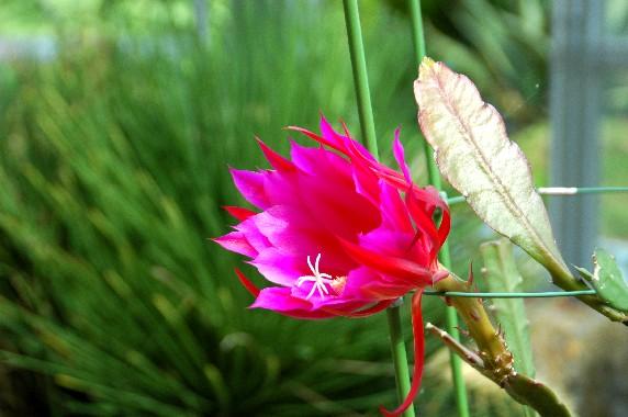 和歌山県植物公園緑花センター _b0093754_2341468.jpg