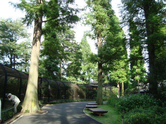 吉祥寺「井の頭自然文化園 分園」へ行く。 ②_f0232060_15232394.jpg