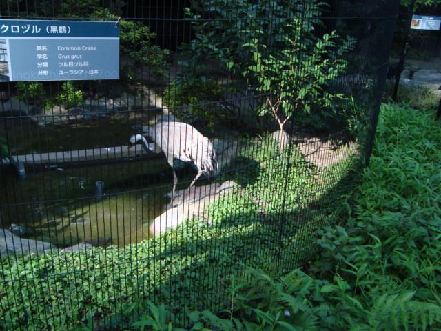 吉祥寺「井の頭自然文化園 分園」へ行く。 ②_f0232060_15271119.jpg