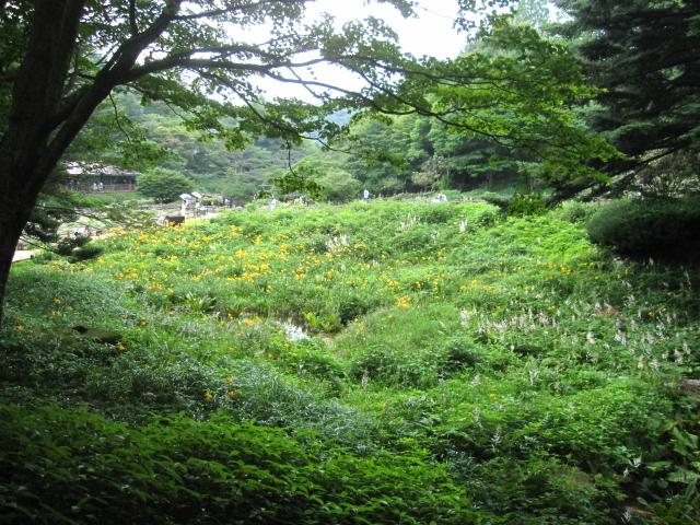 高山植物園と花鳥園_e0181373_21182724.jpg