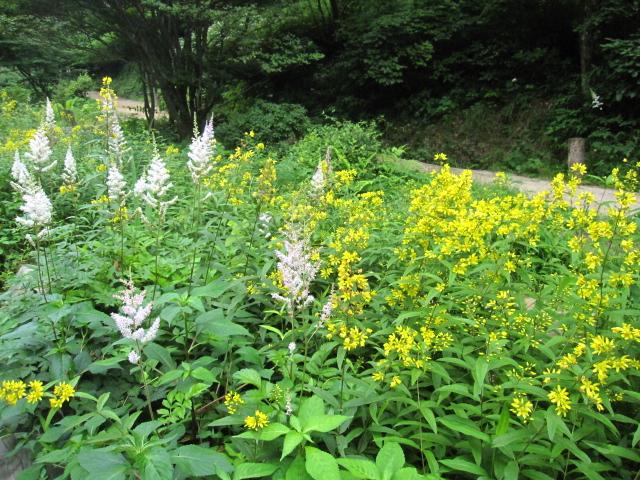 高山植物園と花鳥園_e0181373_21262534.jpg