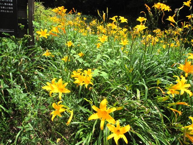 高山植物園と花鳥園_e0181373_21564126.jpg