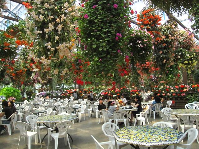 高山植物園と花鳥園_e0181373_21582766.jpg
