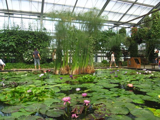 高山植物園と花鳥園_e0181373_21594971.jpg