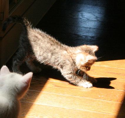行き倒れ猫…_d0071596_20332296.jpg