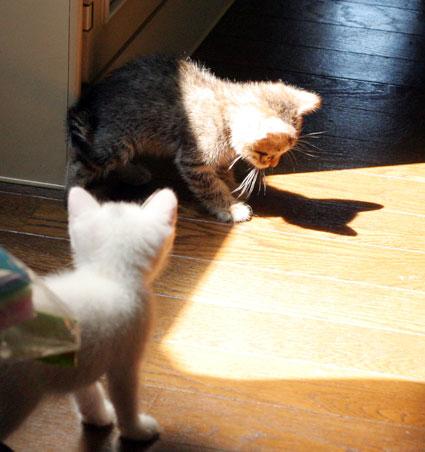 行き倒れ猫…_d0071596_2033444.jpg