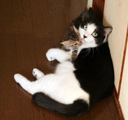 行き倒れ猫…_d0071596_203820100.jpg