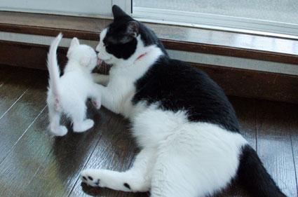行き倒れ猫…_d0071596_20394138.jpg