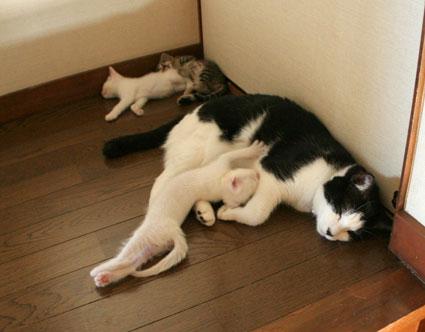 行き倒れ猫…_d0071596_2047217.jpg