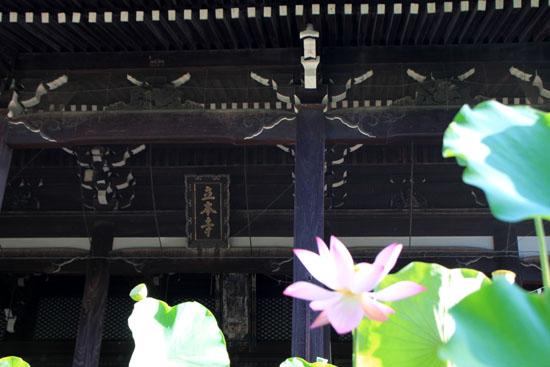 立本寺の大蓮_e0048413_15384310.jpg