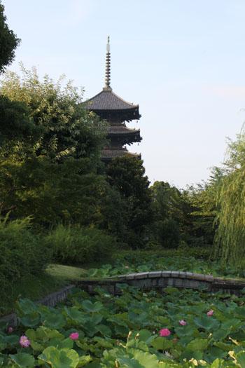 東寺 放生池のハス_e0048413_9273873.jpg