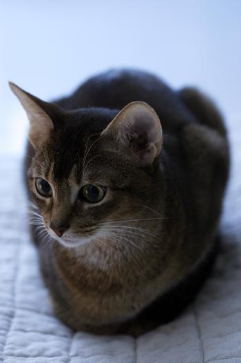 [猫的]Untitled series_e0090124_7472824.jpg
