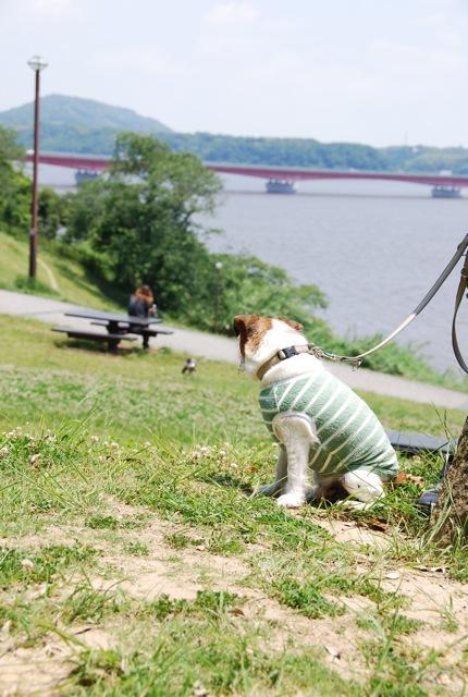 愛犬と旅行(6月のこと)_c0099133_1622770.jpg