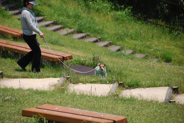 愛犬と旅行(6月のこと)_c0099133_16232859.jpg