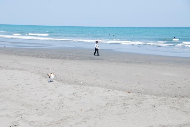 愛犬と旅行(6月のこと)_c0099133_16292076.jpg