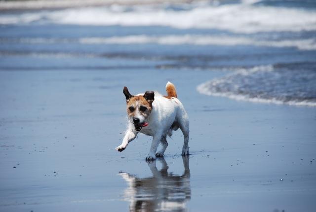 愛犬と旅行(6月のこと)_c0099133_16295112.jpg