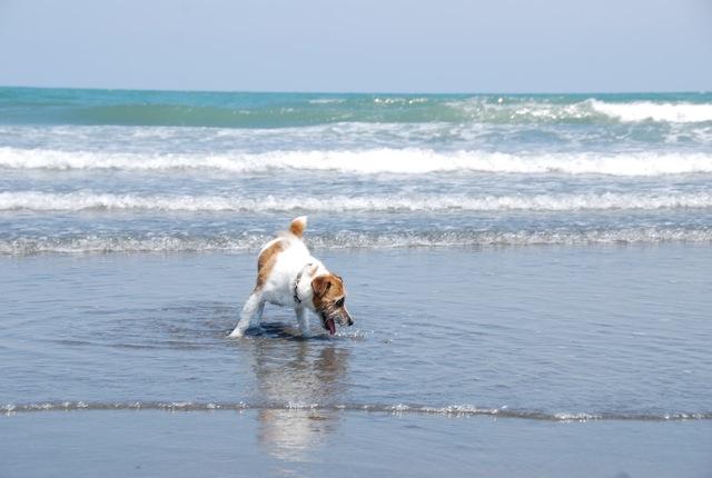 愛犬と旅行(6月のこと)_c0099133_1630764.jpg